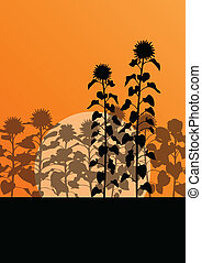Sunflower field landscape vector background concept for...