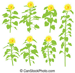 Sunflower vector background ecology concept for poster