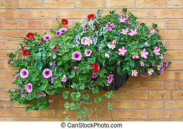 Summer bedding flowers in a wall mounted basket - Wall...
