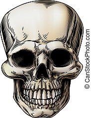 Human Skull Illustration - A human Skull or grim reaper...
