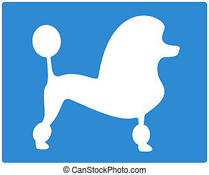 blue dog poodle image - blue background with dog poodle...