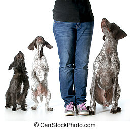 woman and her dogs - dog training - woman with two german...