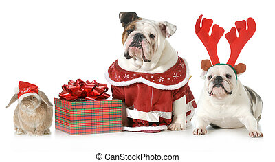 christmas pets - three pets dressed up for christmas...