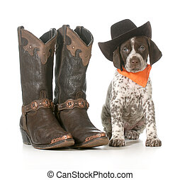 country dog - german shorthaired pointer wearing western hat...