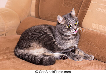 portrait of domestic cat on a sofa