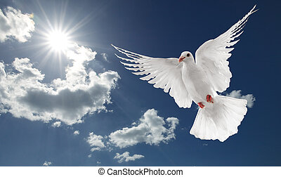 white dove flying on clear blue sky