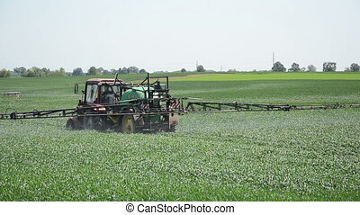 field tractor spray - large field of young corn seasonal...