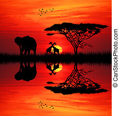 Elephant at sunset - Elephant silhouette at sunset