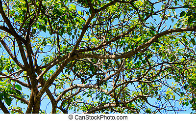 Tree branches with blue sky on a sunny day