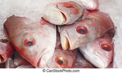 Fish Market Red Fish Heads Dolly - Close up, dolly shot of a...