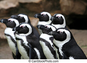 Group of penguins - Group of funny penguins all looking in...
