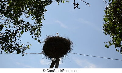 stork bird nest tree leaf