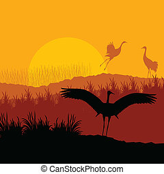 Crane flying in wild mountain nature landscape