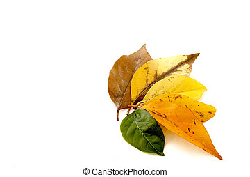 Stages Of Leaf Coloring Depicting Life Cycle