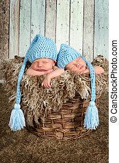 bebê, cesta, gêmeos