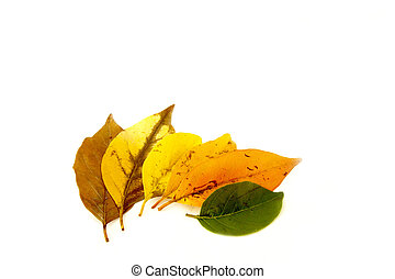 Various Leaf Colors Depicting Cycle Of Life