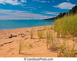 Bright Colored Dune Grass - Bright Colored Grass in the...