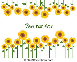 Yellow sunflowers vector background