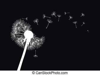 white dandelion on black