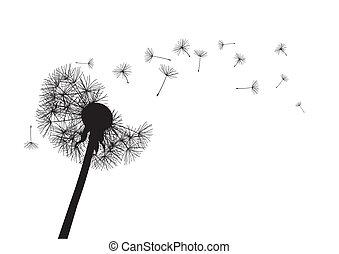 black dandelion on white