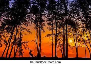 deer via silhouette - silhouette deer and tree via great...