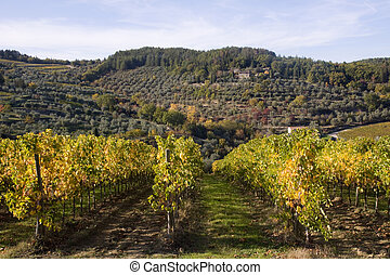 Chianti Area