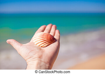 Cockleshell on hand background the sea