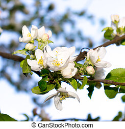 branch of white flowers in spring