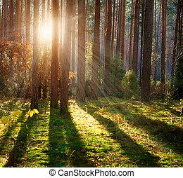 brumoso, viejo, bosque, otoño, bosque