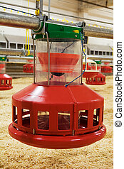 poultry farm - Automatic feeding trough on a modern...