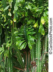 cactus brushwood - The image of cactus brushwood