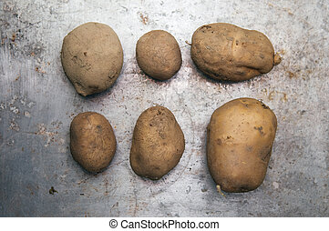 Potatos  - Raw potatos on metal surface