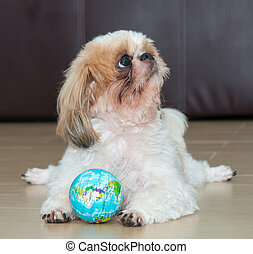 Portrait of a dog play the world ball