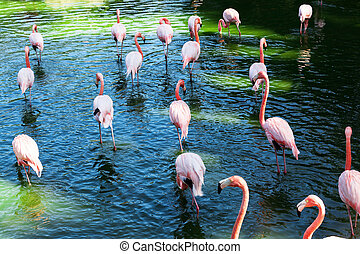 a flock of flamingos on the lake