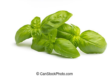 Basil - Basil isolated on the white background
