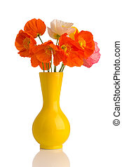 Poppy. - Poppies in a vase on a white background.