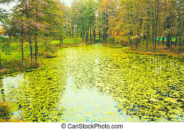 Wild Bog Swamp - Green Wild Bog Swamp Russian Nature In...