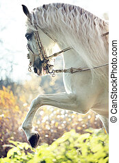 Majestic royal horse in move - Majestic royal white horse in...