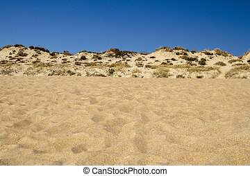 beach landscape with dune vegetation and sand