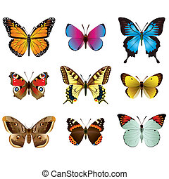 Butterflies photo-realistic vector set - Vector collection...