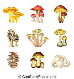 Mushrooms isolated on white vector set - Popular mushrooms...