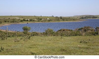 Colliford lake reservoir Bodmin Moor Cornwall England UK