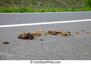 Horseshit - Horse excrement on the asphalt surface
