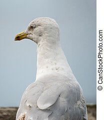 Close up view of the head of a seagull in profile viewed across its back showing feather detail against blue sky