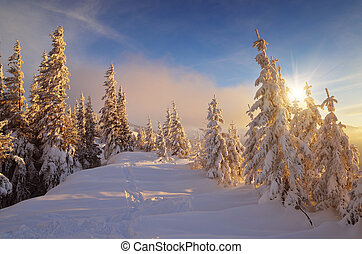 Warm light of the sun on cold snow - Winter landscape with...