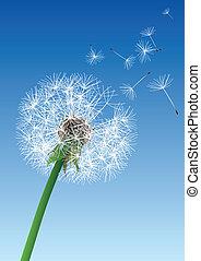 vector dandelion on blue background
