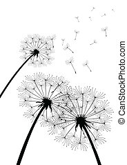 vector dandelions on white