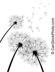 vector dandelions on white