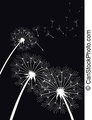 vector dandelions on black