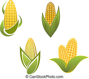 Yellow corn icons and symbols for agriculture design